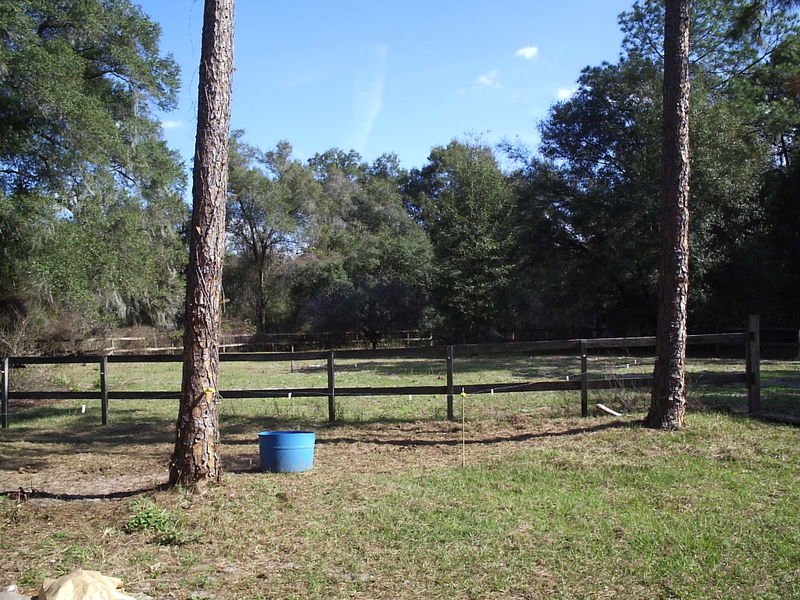 Horse Paddock 1