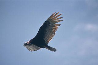 Vulture - Gov Pub Domain